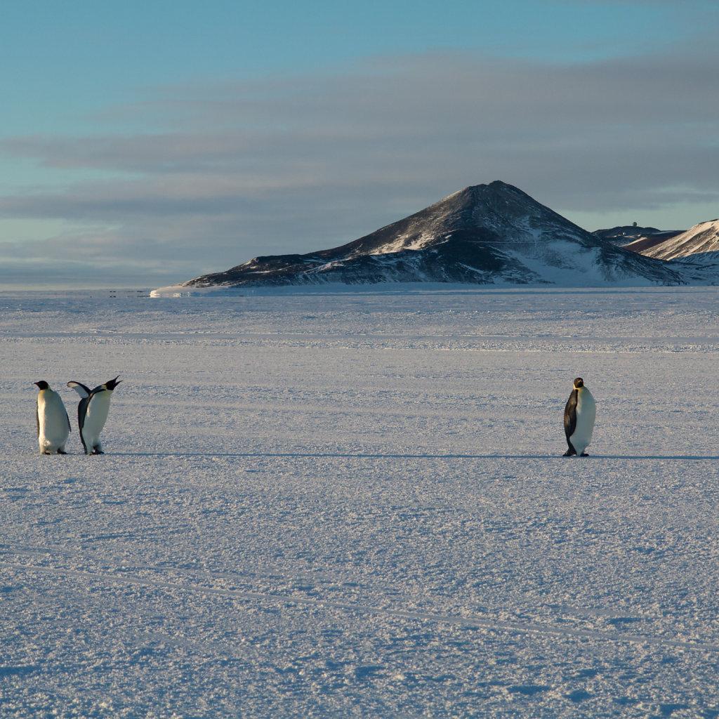 Penguins on runway
